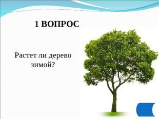 1 ВОПРОС Растет ли дерево зимой?