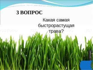 3 ВОПРОС Какая самая быстрорастущая трава?