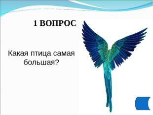 1 ВОПРОС Какая птица самая большая?