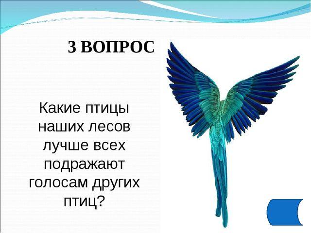 3 ВОПРОС Какие птицы наших лесов лучше всех подражают голосам других птиц?
