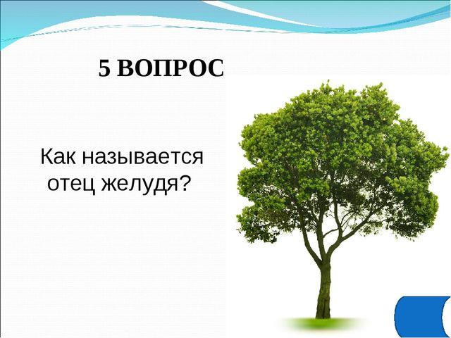 5 ВОПРОС Как называется отец желудя?