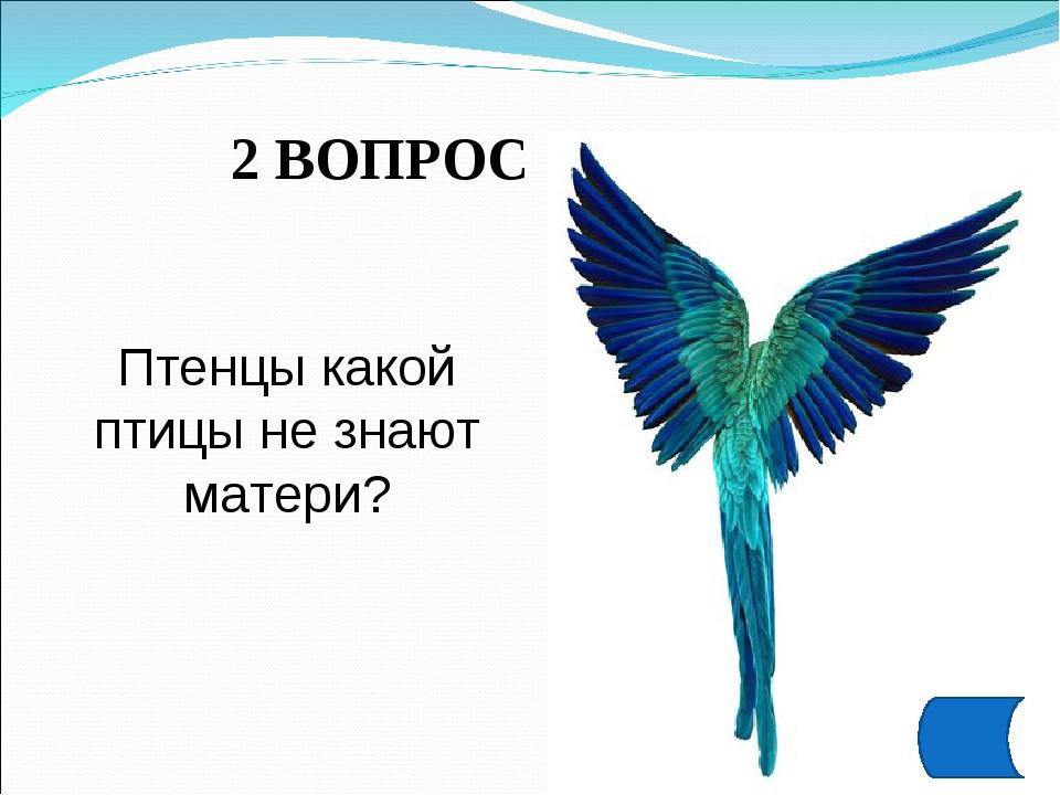 2 ВОПРОС Птенцы какой птицы не знают матери?