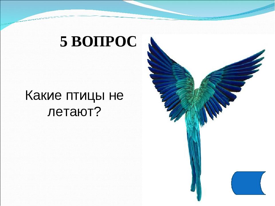 5 ВОПРОС Какие птицы не летают?