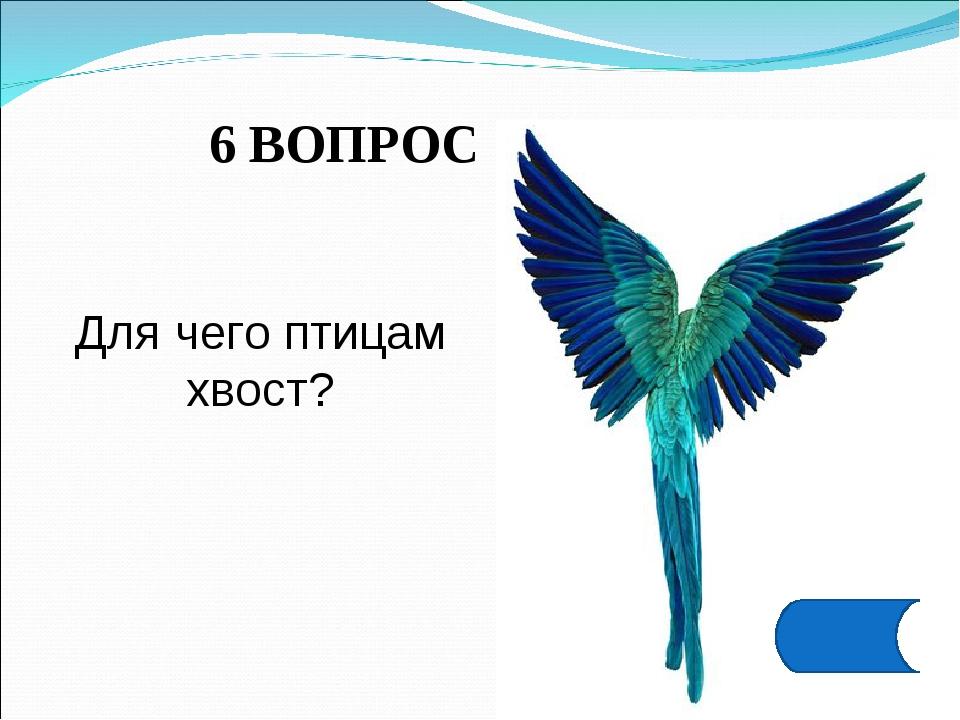 6 ВОПРОС Для чего птицам хвост?