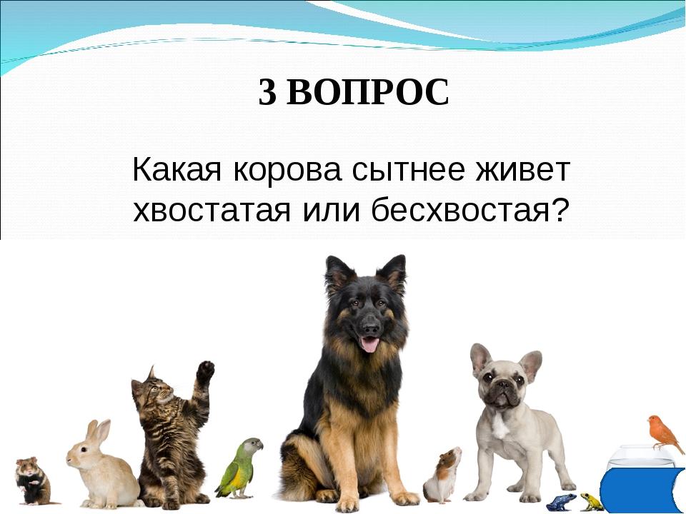 3 ВОПРОС Какая корова сытнее живет хвостатая или бесхвостая?