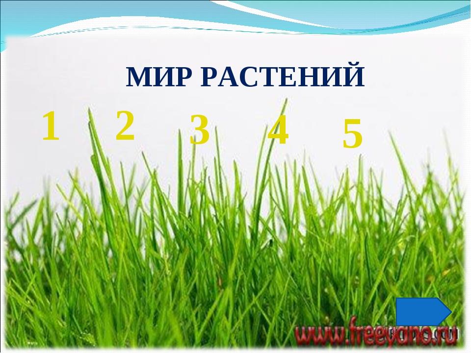 МИР РАСТЕНИЙ 1 2 5 3 4