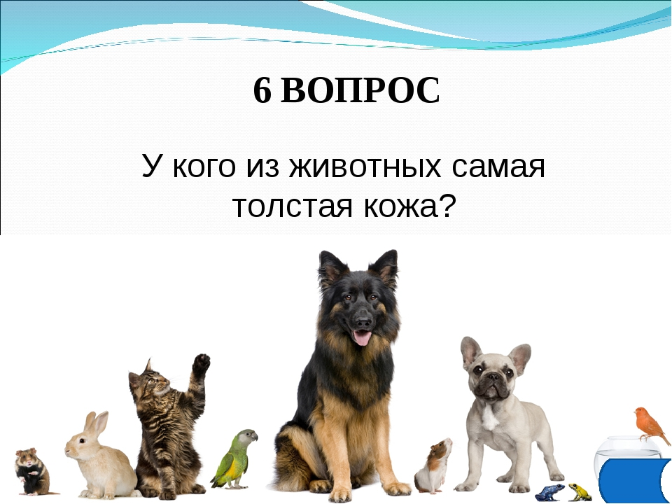 6 ВОПРОС У кого из животных самая толстая кожа?