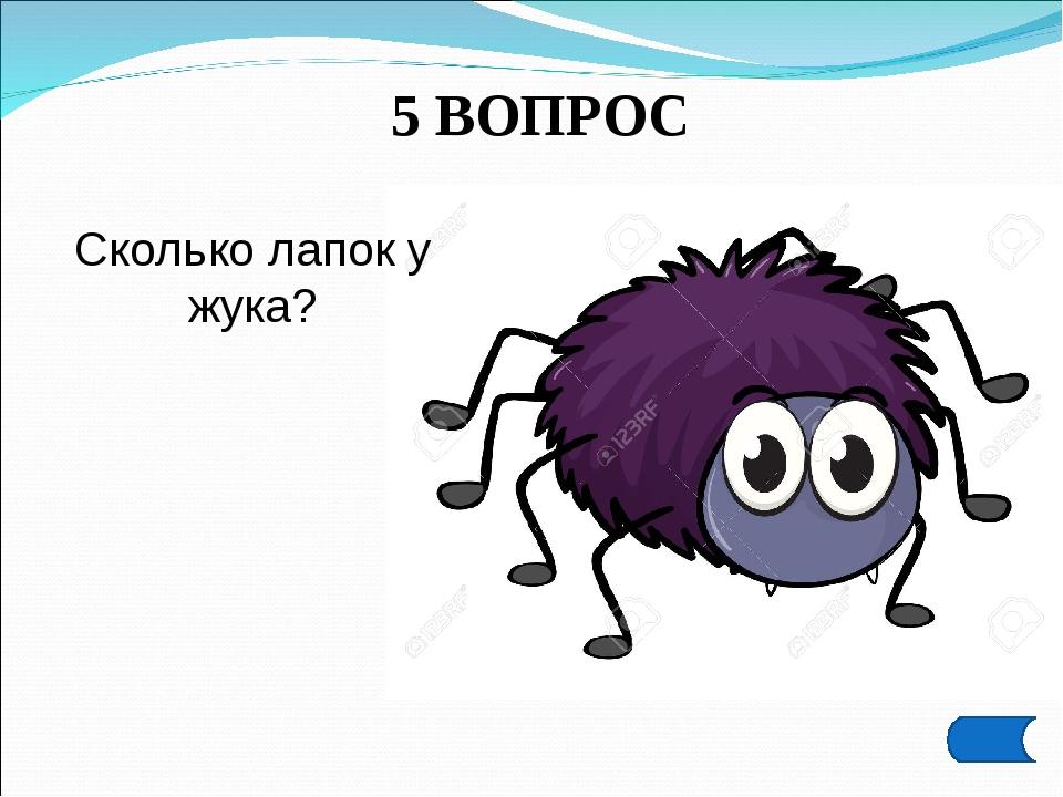 5 ВОПРОС Сколько лапок у жука?