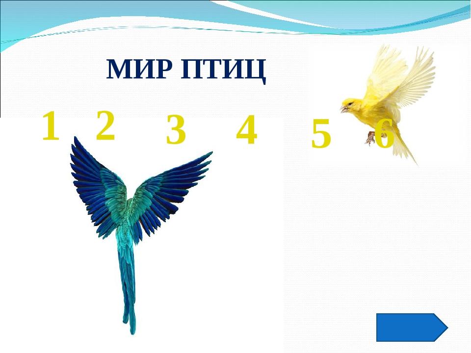 МИР ПТИЦ 1 2 5 3 4 6
