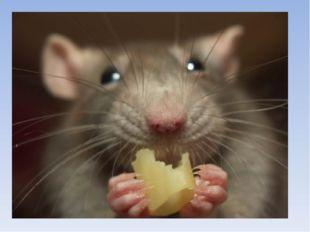 Кто больше ест? мишка: мышка: 70кг корма. в 4,2 раза больше собс