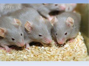 У кого больше видов? мишка:мышка:  8 400  Победила мышка!!!