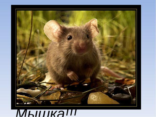 Длина хвоста. Мишка:Мышка: 8 до 13 см от 9 до 18см. Победила Мышка!!!