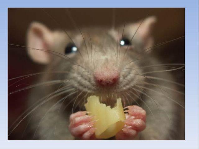 Кто больше ест? мишка: мышка: 70кг корма. в 4,2 раза больше собс...