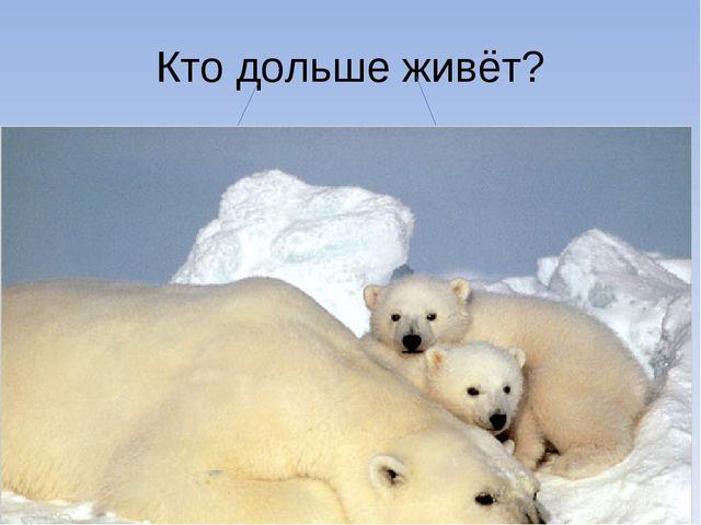Кто дольше живёт?  мишка: мышка: до 25-30 лет. 2-3 года.  Победил Ми...
