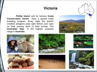 Victoria Koala Conservation Centre Phillip Island Nature Park Australian Alp