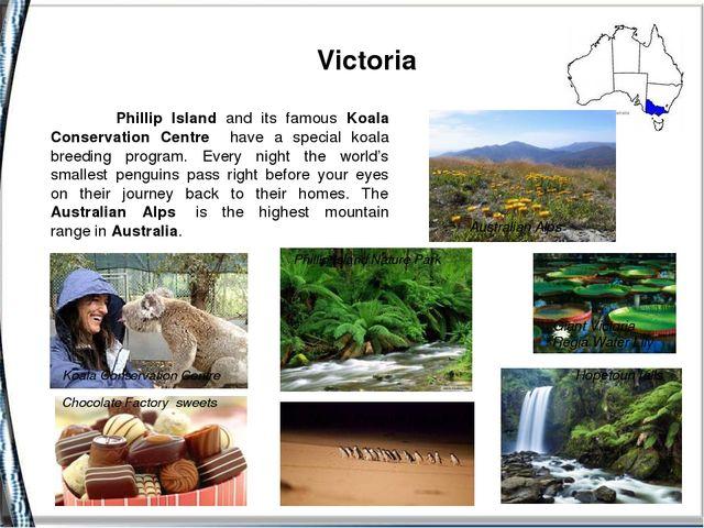 Victoria Koala Conservation Centre Phillip Island Nature Park Australian Alp...