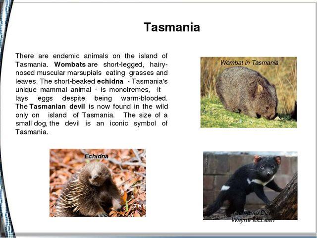 Tasmania Tasmania Devil Wayne McLean Echidna Wombat in Tasmania There are e...