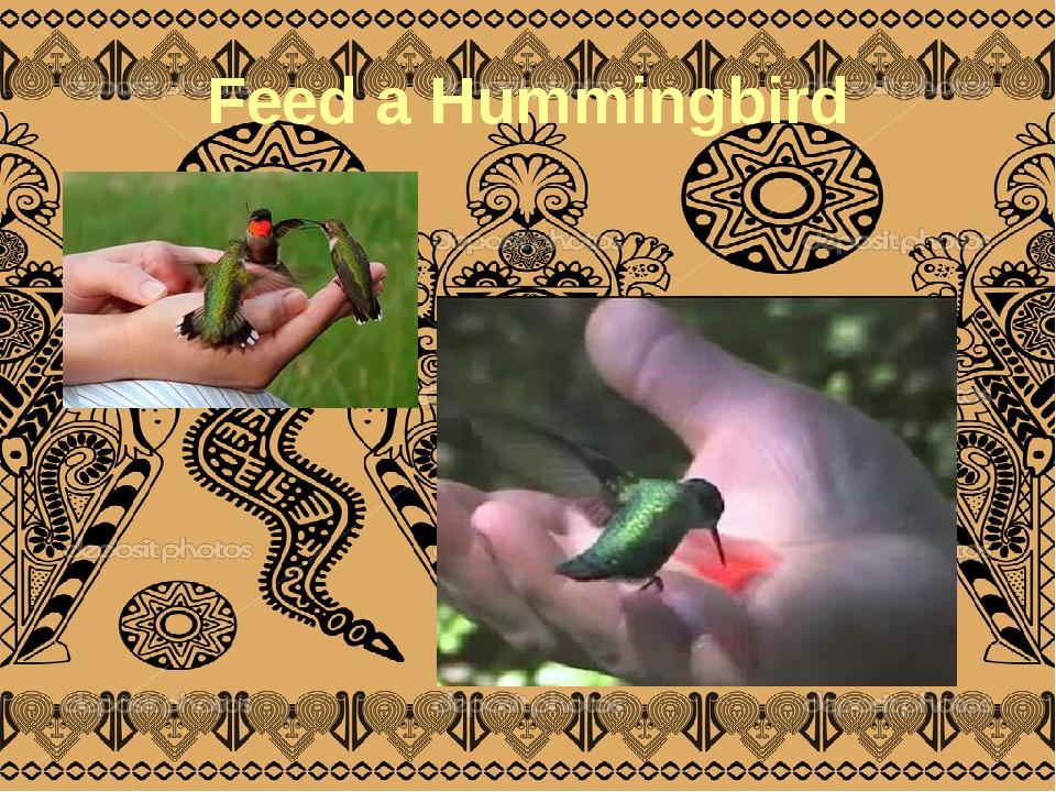Feed a Hummingbird