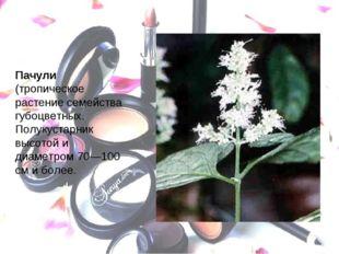 Пачули (тропическое растение семейства губоцветных. Полукустарник высотой и д