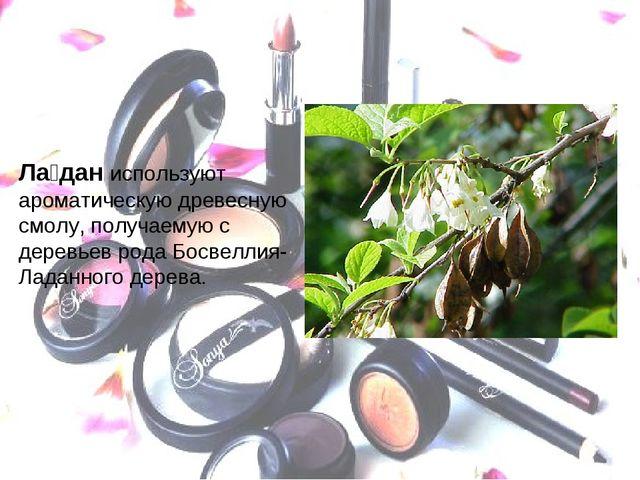 Ла́дан используют ароматическую древесную смолу, получаемую с деревьев рода Б...