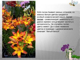 Хотя лилии бывают разных оттенков, но именно белым цветам придается особый си