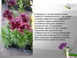 В Германии с лилией связано немало сказаний о загробной жизни. Она служит у н