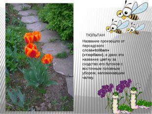 Название произошло от персидского слова«toliban» («тюрбан»), и дано это назва