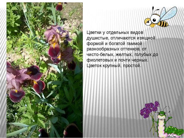 Цветки у отдельных видов душистые, отличаются изящной формой и богатой гаммой...