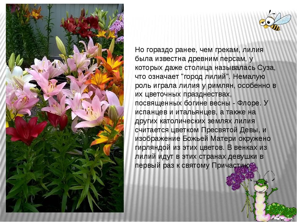 Но гораздо ранее, чем грекам, лилия была известна древним персам, у которых д...