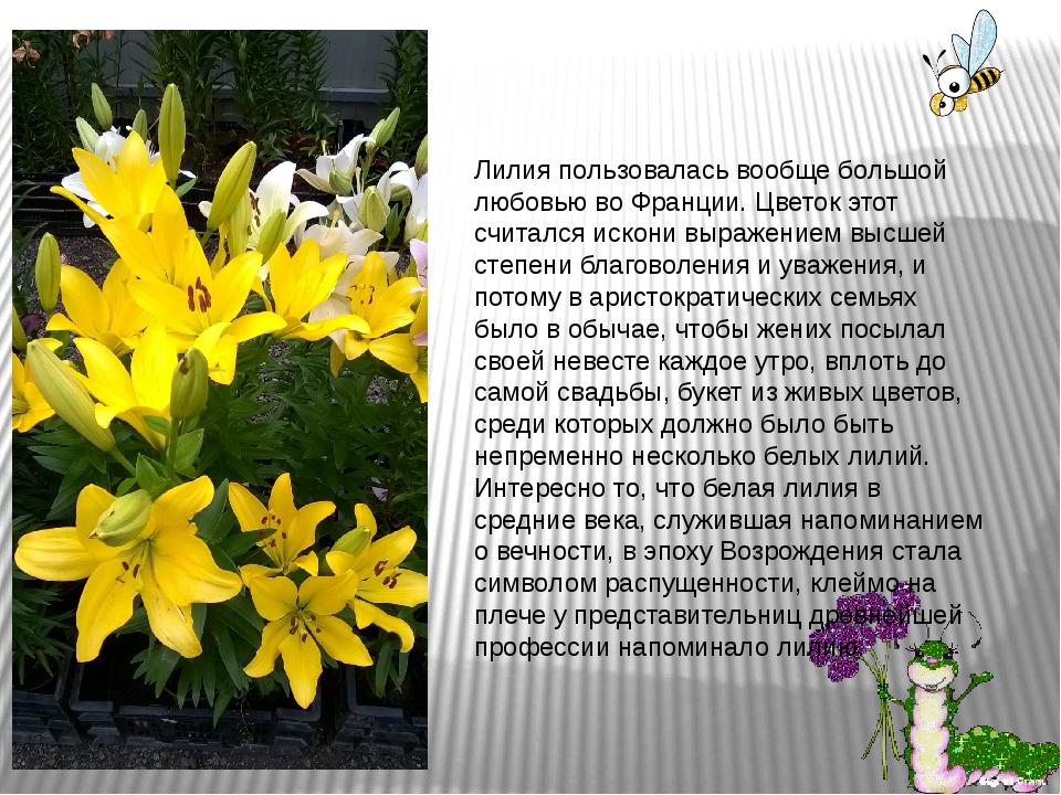 Лилия пользовалась вообще большой любовью во Франции. Цветок этот считался ис...