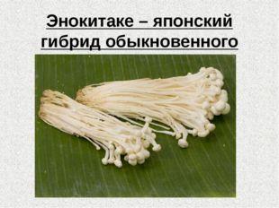 Энокитаке – японский гибрид обыкновенного опёнка.
