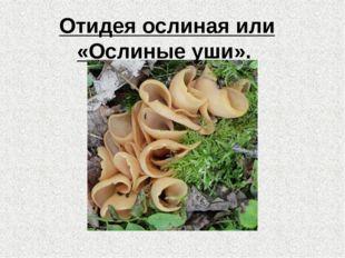 Отидеяослиная или «Ослиныеуши».