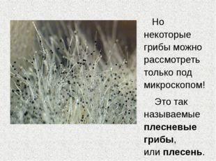 Но некоторые грибы можно рассмотреть только под микроскопом! Это так называем