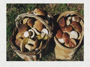 И, наконец, у грибников существует такое понятие, как «грибная охота» или «ти