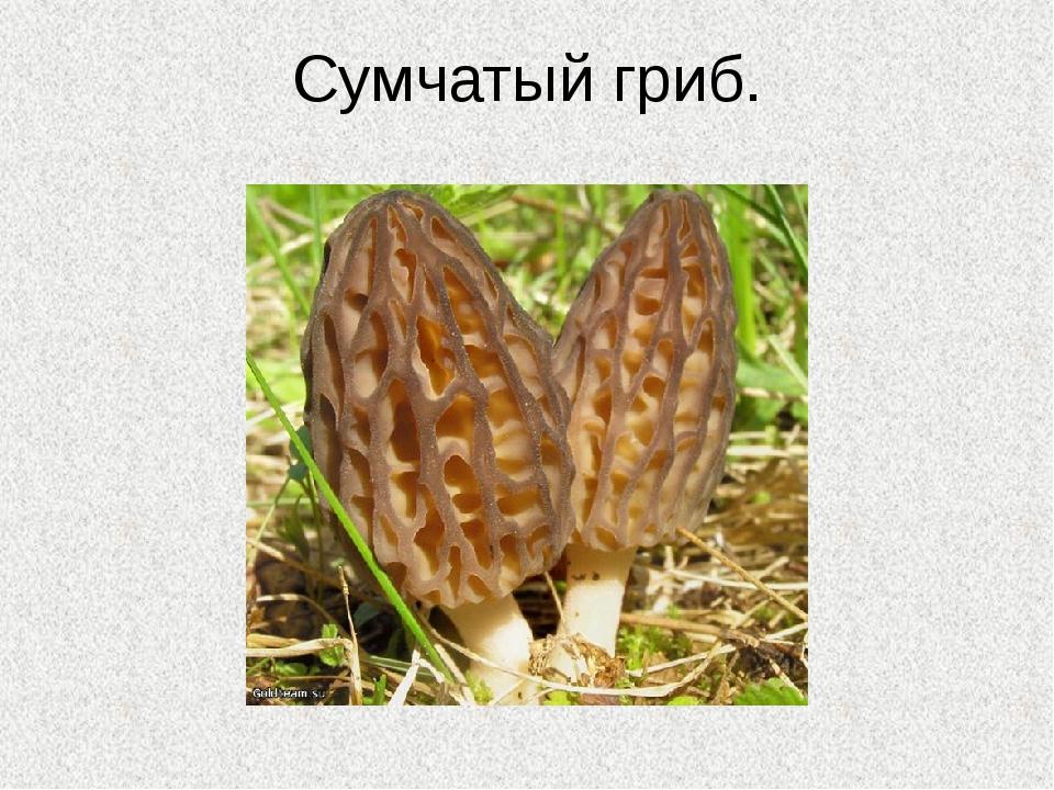 Сумчатый гриб.