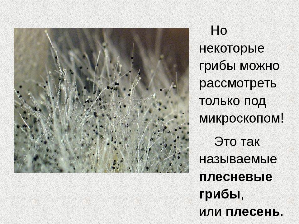 Но некоторые грибы можно рассмотреть только под микроскопом! Это так называем...