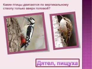 Какие птицы двигаются по вертикальному стволу только вверх головой?