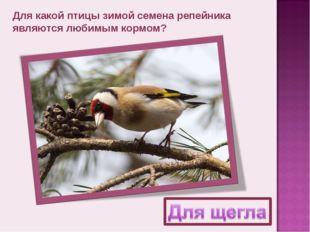 Для какой птицы зимой семена репейника являются любимым кормом?
