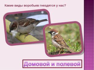 Какие виды воробьев гнездятся у нас?