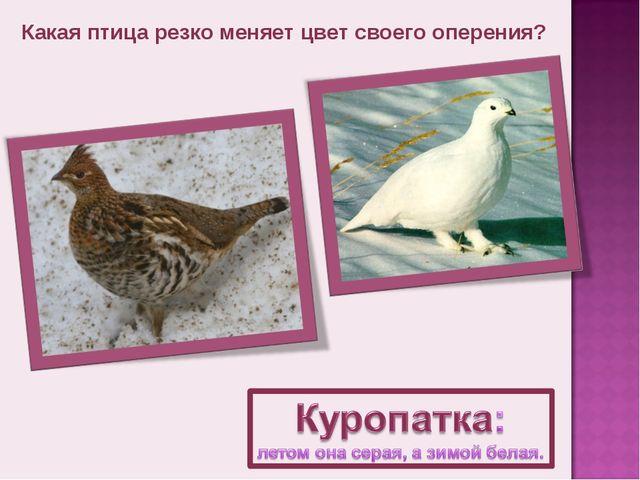 Какая птица резко меняет цвет своего оперения?