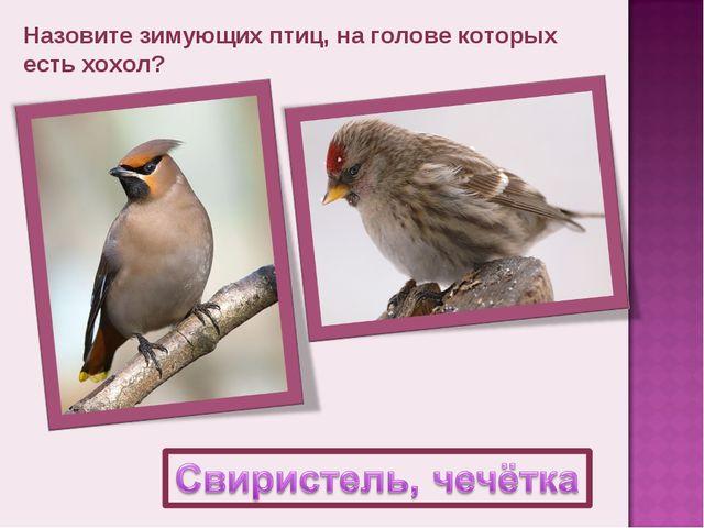 Назовите зимующих птиц, на голове которых есть хохол?