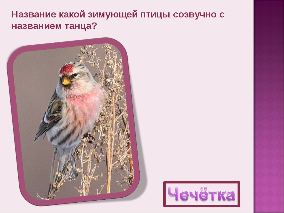 Название какой зимующей птицы созвучно с названием танца?