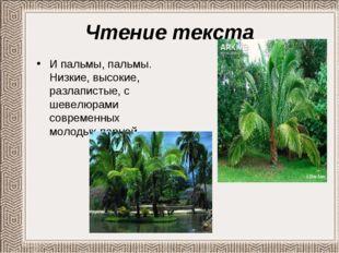 Чтение текста И пальмы, пальмы. Низкие, высокие, разлапистые, с шевелюрами со