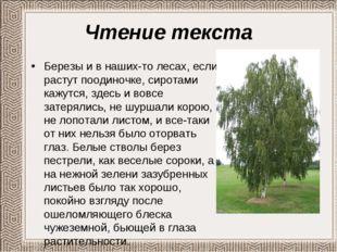 Чтение текста Березы и в наших-то лесах, если растут поодиночке, сиротами каж