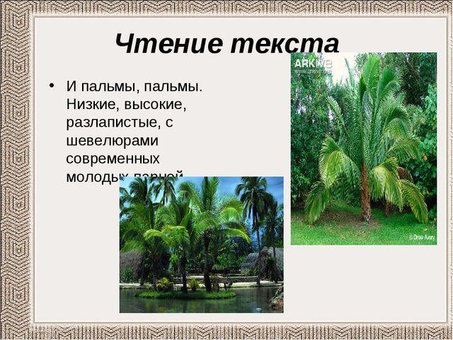 Чтение текста И пальмы, пальмы. Низкие, высокие, разлапистые, с шевелюрами со...