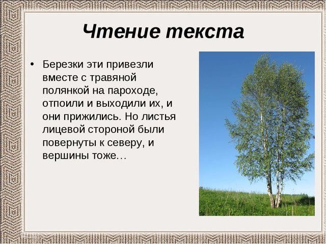 Чтение текста Березки эти привезли вместе с травяной полянкой на пароходе, от...
