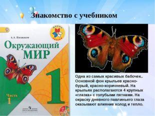 .Знакомство с учебником Одна из самых красивых бабочек.. Основной фон крылье