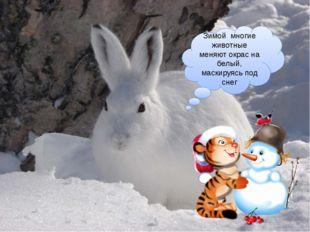 Зимой многие животные меняют окрас на белый, маскируясь под снег