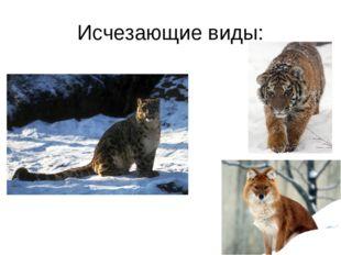 Исчезающие виды: