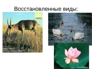 Восстановленные виды: